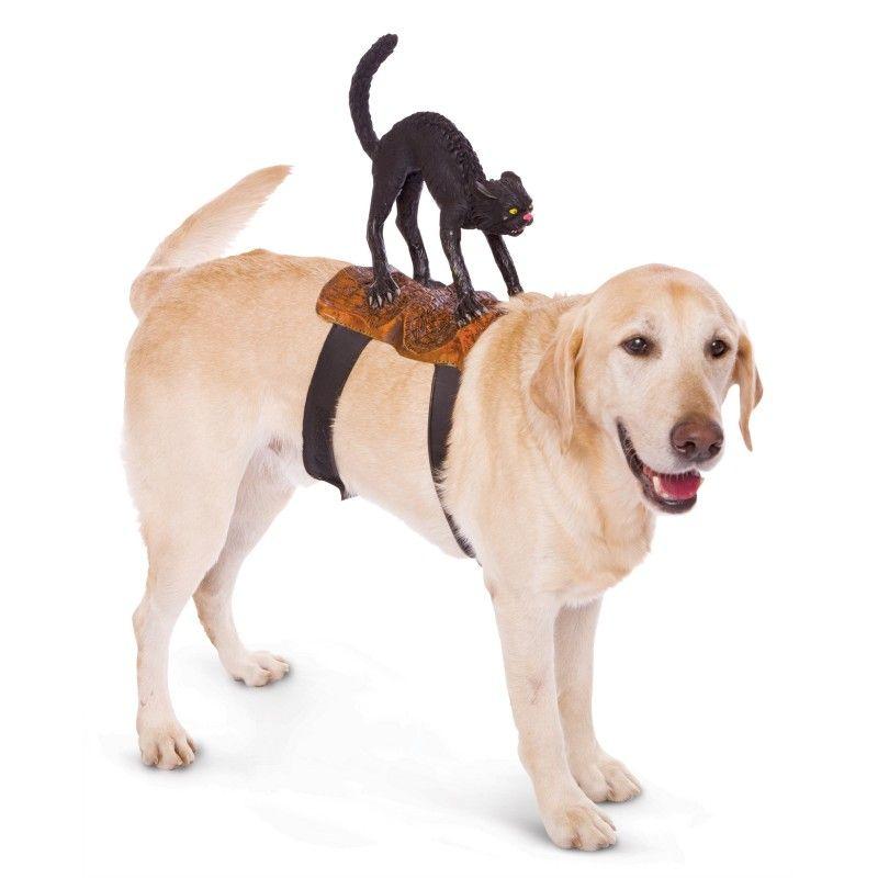 Paper Magic Cat Rider Pet Costume One-Size Black  sc 1 st  Pinterest & Black Cat Attack Halloween Dog Costume http ...