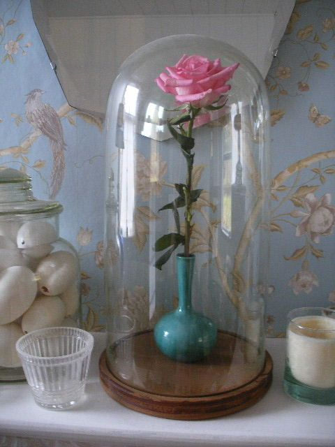a simple rose under a glass dome behind glass pinterest simple rose glass domes and glass. Black Bedroom Furniture Sets. Home Design Ideas