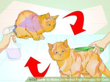 Make An Herbal Flea Remedy For Cats Cat Fleas Treatment Cat Fleas Cat Flea Remedy