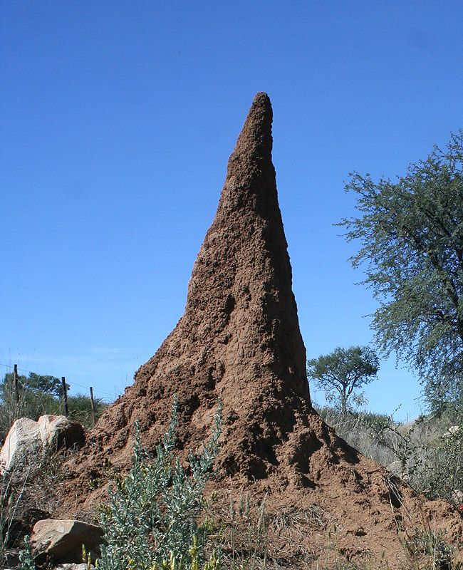 Treknature Termite Mound Photo Termites Nature Inspiration Ant Hill