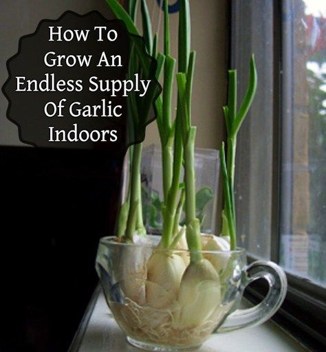 how to create herbal garden inside