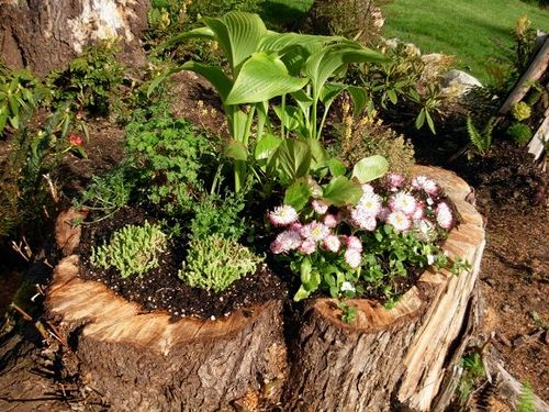 Instead of paying to have tree stumps removed, hollow out the center, drill weep holes, and plant in them!