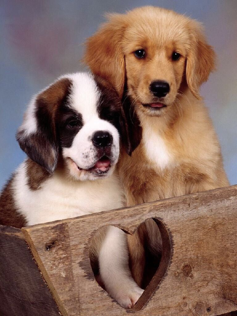 Pin By Mone Daniel On Are We In Or Out Of The Box Cute Puppies Dog Images Beautiful Dogs