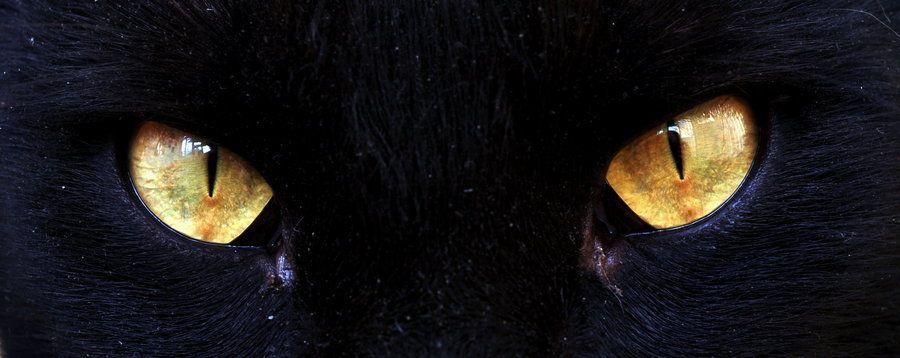 Eyes of the tiger by Sundottir.deviantart.com on @deviantART