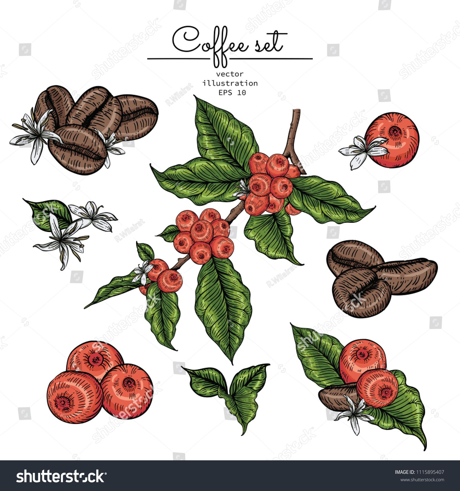 Sketch Floral Botany Collection Coffee Bean Leaf Berries And Flower Drawings Line Art On White Backgrounds Hand D In 2020 Flower Drawing Floral Botany Leaf Drawing