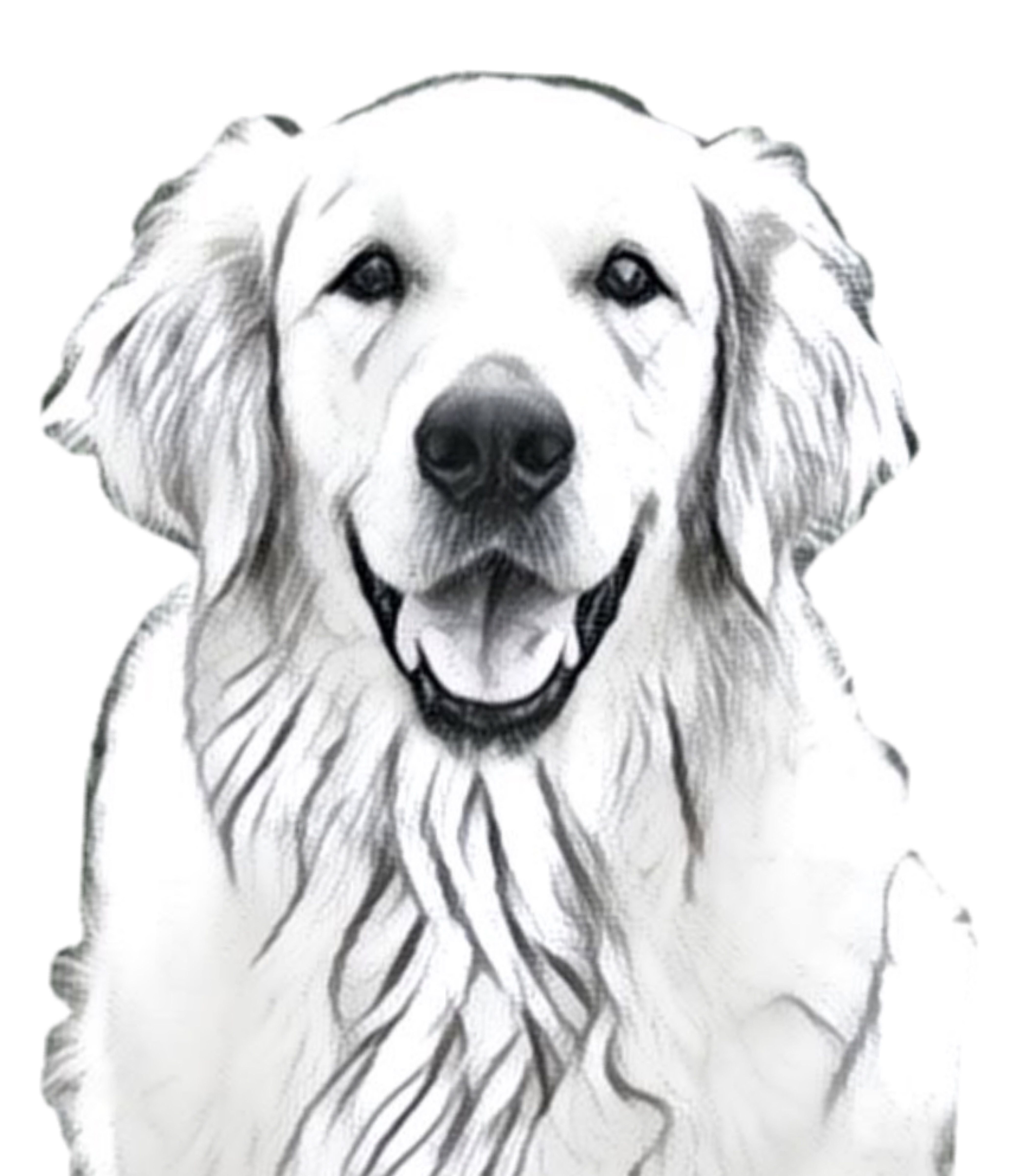 Smile In 2021 Golden Retriever Painting Golden Retriever Drawing Dog Watercolor Painting [ 4800 x 4200 Pixel ]