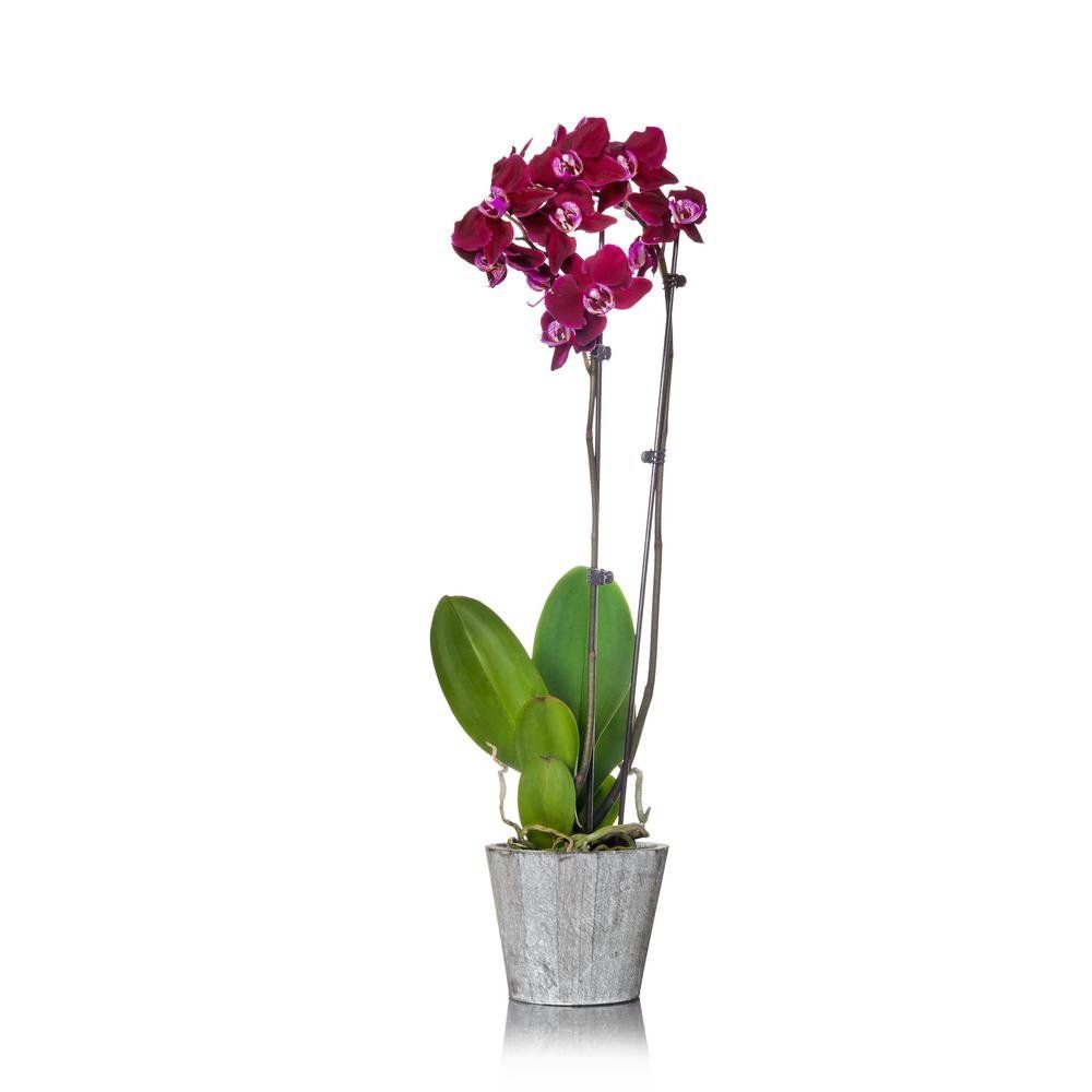 Just Add Ice Purple 5 In Orchid Plant In Wood Pot 2 Stems 270780 The Home Depot 1000 In 2020 Orchid Plants Plants Orchids