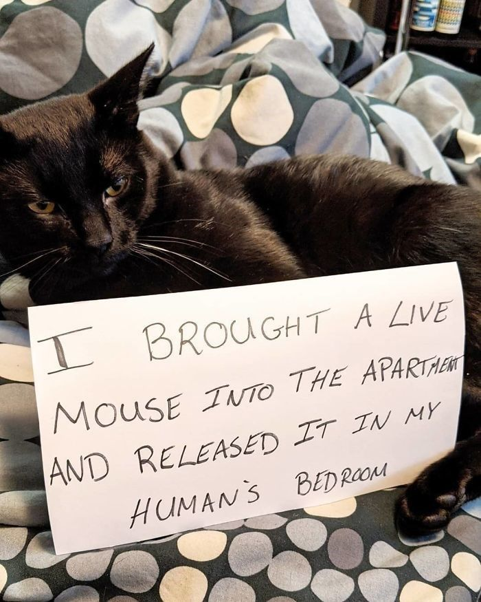 Pet Shaming At Its Finest (40 Pics) - I Can Has Cheezburger?