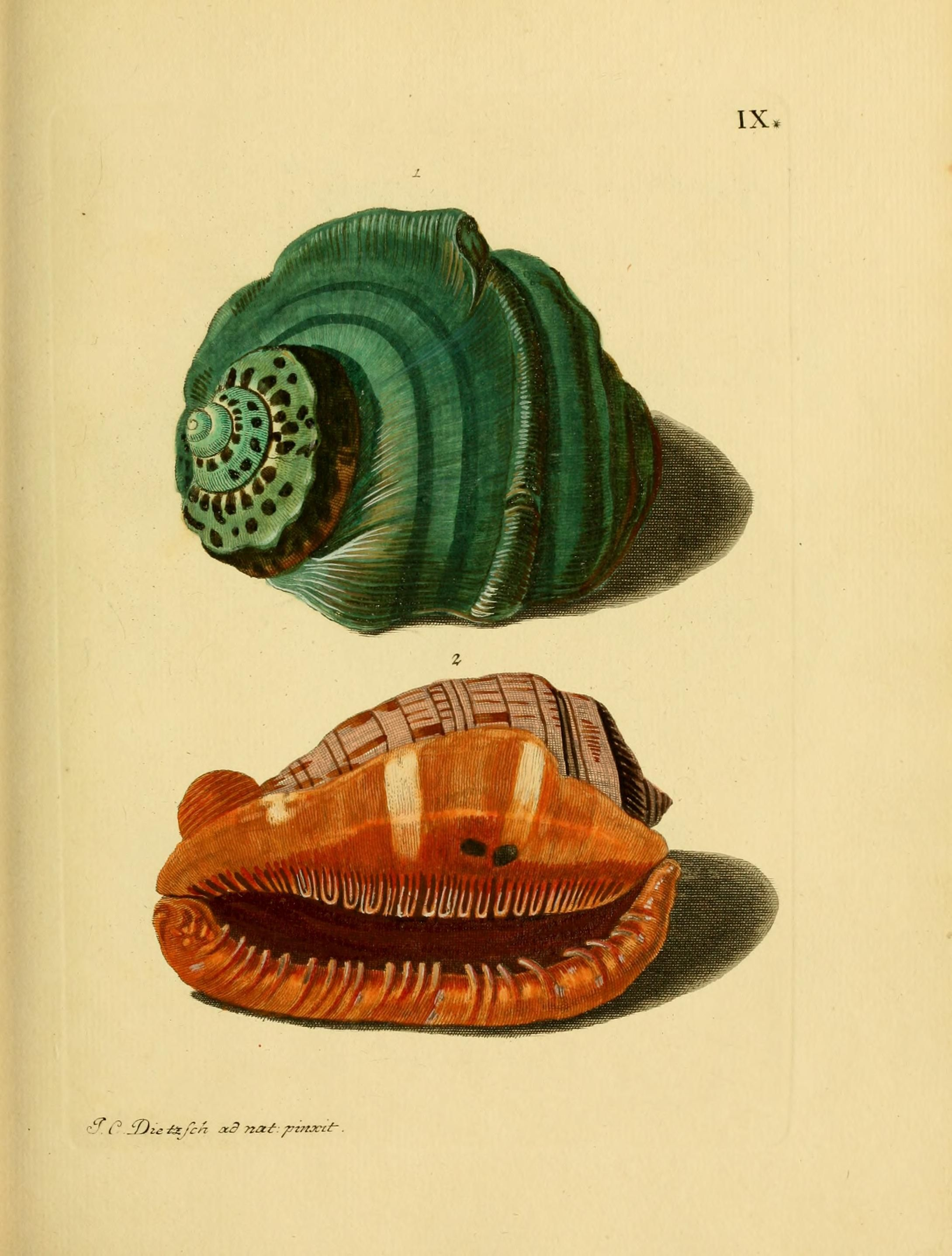 G. W. Knorrs Verlustiging der oogen en van den geest d.2  Te Amsterdam :By de erven van F. Houttuyn,1770-1775.