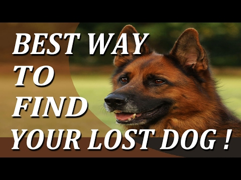 6442 Best Way To Find Your Lost Dog Youtube Losing A Dog Dogs Dog Pack Leader