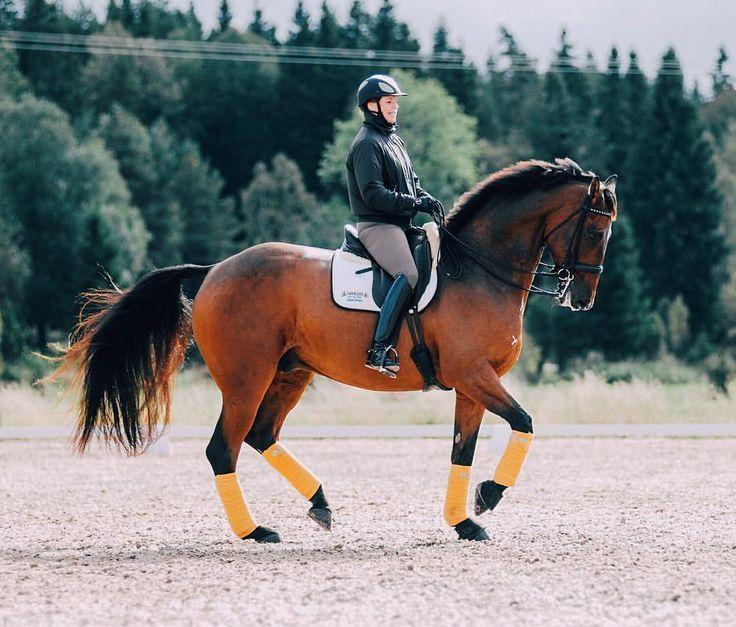 Horse Care Tips Barn Hacks Barn Ideas Stable Hacks Stable Ideas Equestrian