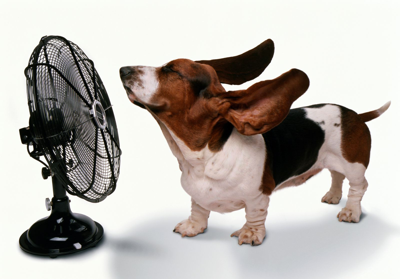 How to Keep Your House Cool Without A/C Funny animal