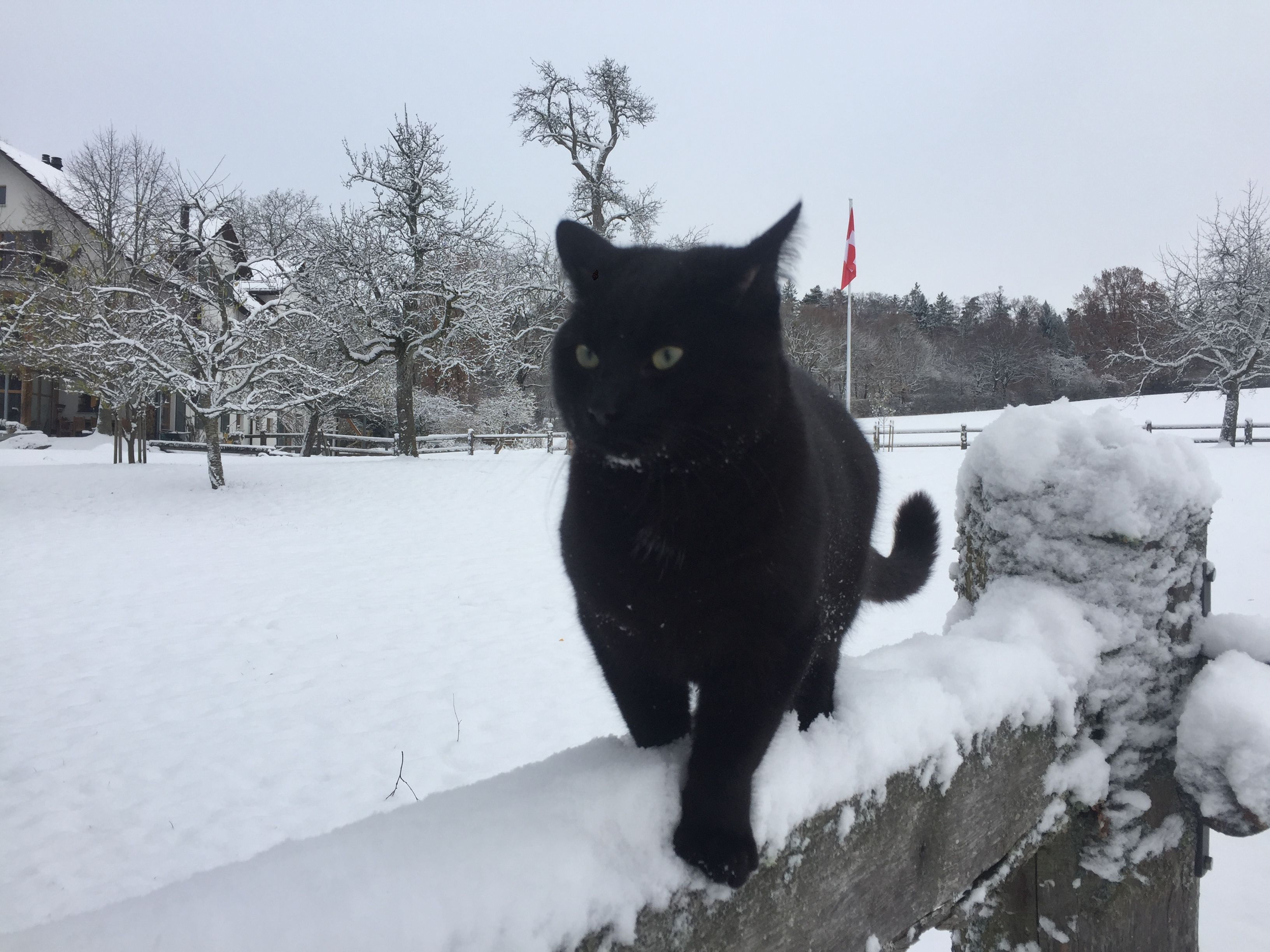 Tinka black cat in the snow Cats Pinterest Black cats and Cat