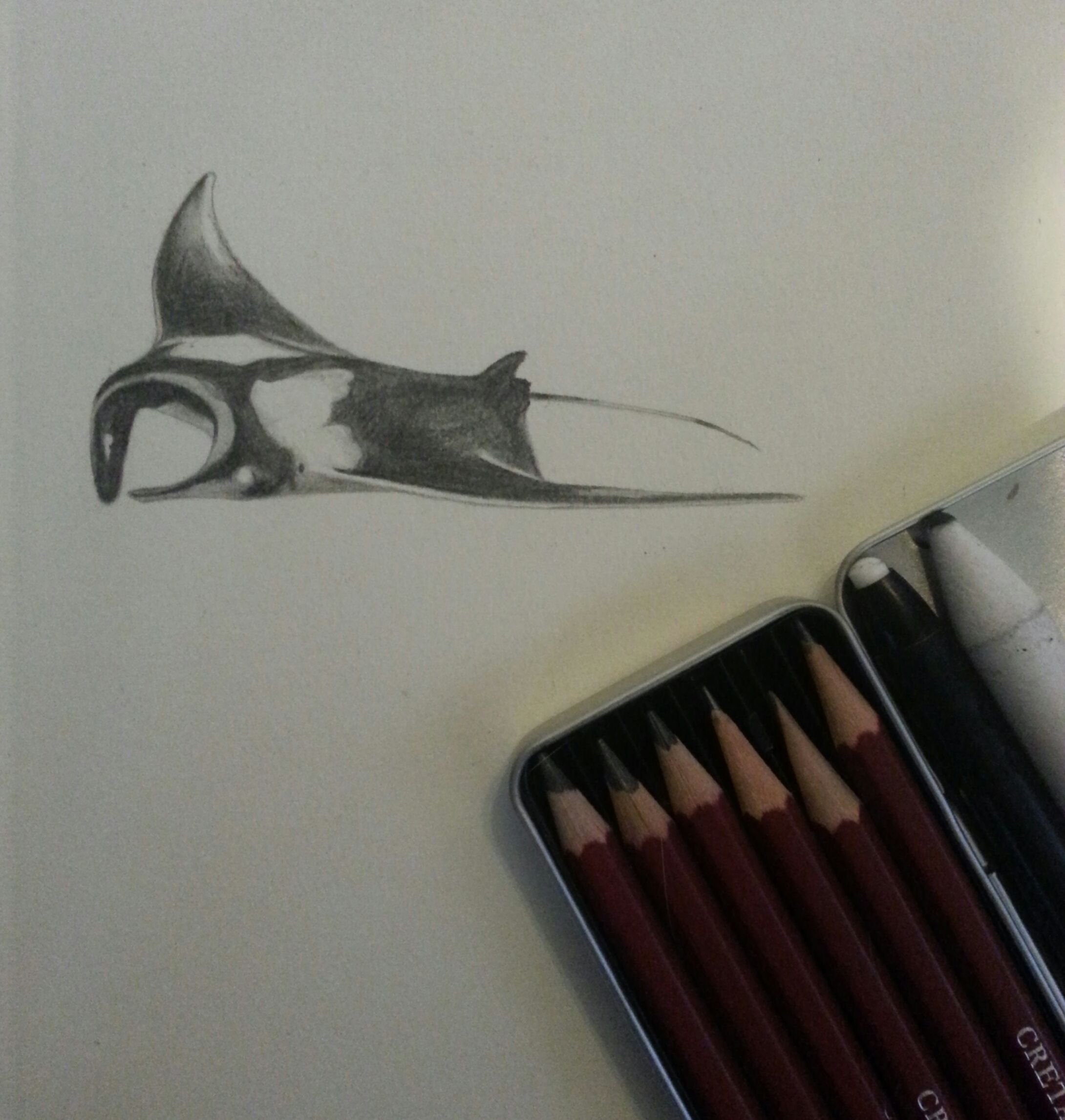 2nd in a series of manta ray pencil sketches I've been working on.  Just working on composition and tone before I attempt to turn them into ocean animal themed tattoo flash.  art / artist / drawing