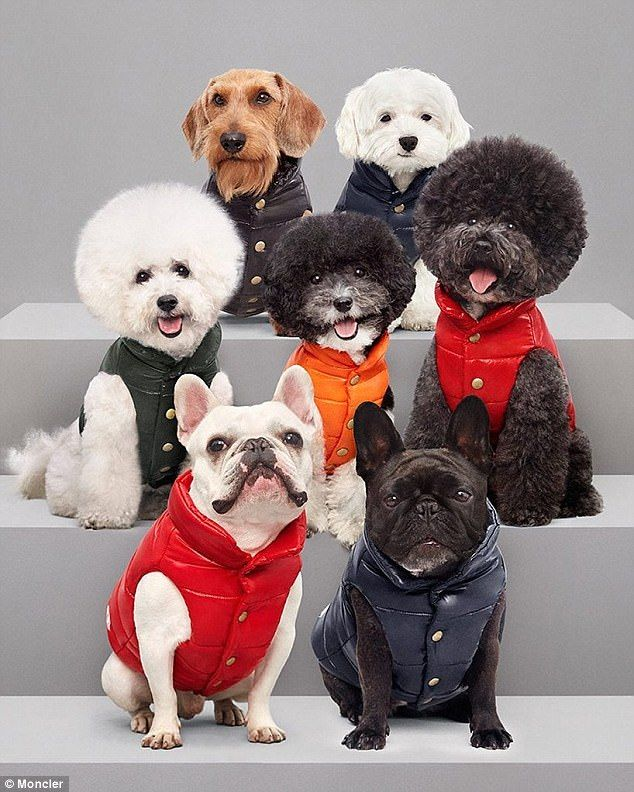 The 280 Moncler Jacket That S Designed For Your Dog Dog Coats