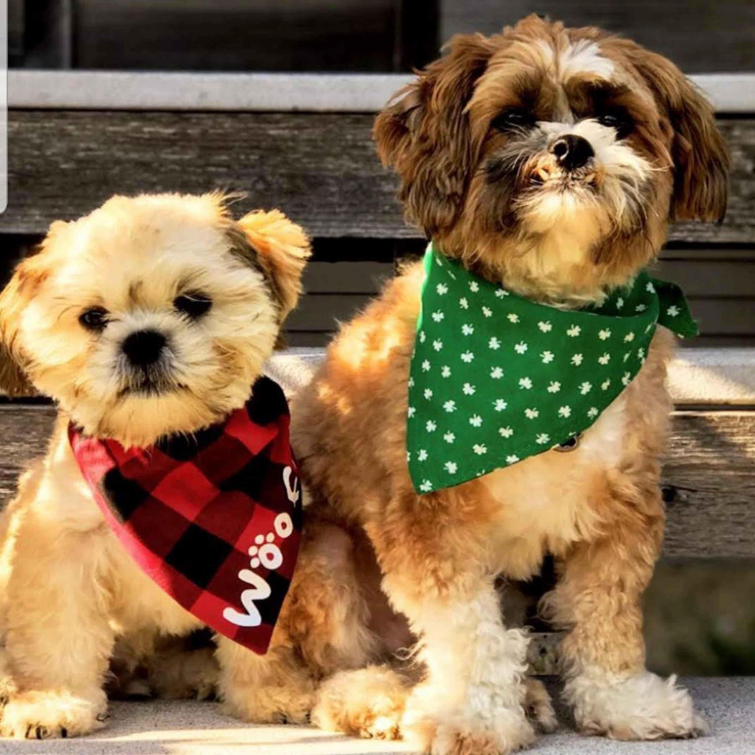 TimberCreek Puppies Puppy, Puppies,Shihpoo Puppies for