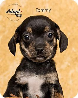 Pin By Kay On Pups Pinterest Chihuahua Pup And Pets