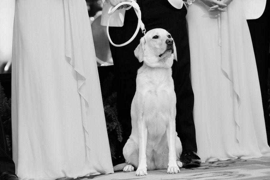 Wedding Reception, with Labrador Dog in Wedding Party