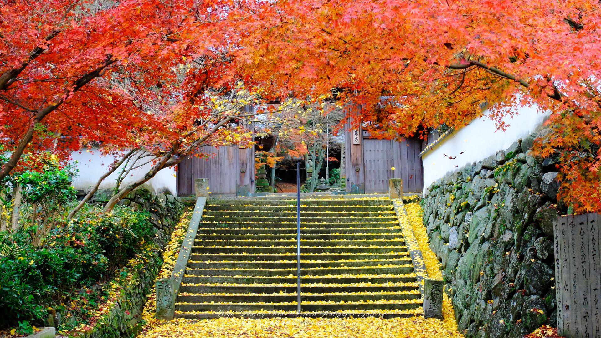 ワイド壁紙 19x1080 紅葉と黄葉 壁紙 高画質 壁紙 自然