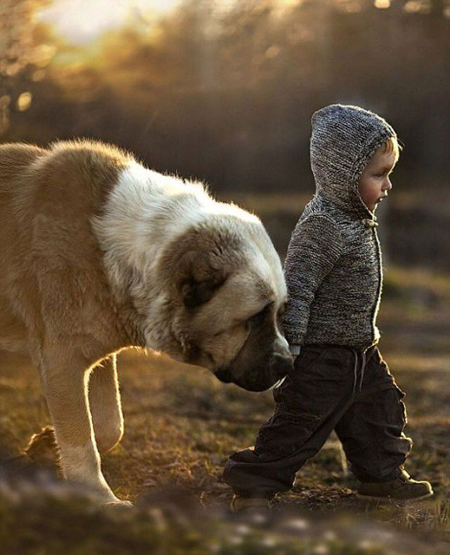 Little Human Big Dog II Animals Pinterest Dog Animal And - Theo beau cutest animal human pairing ever