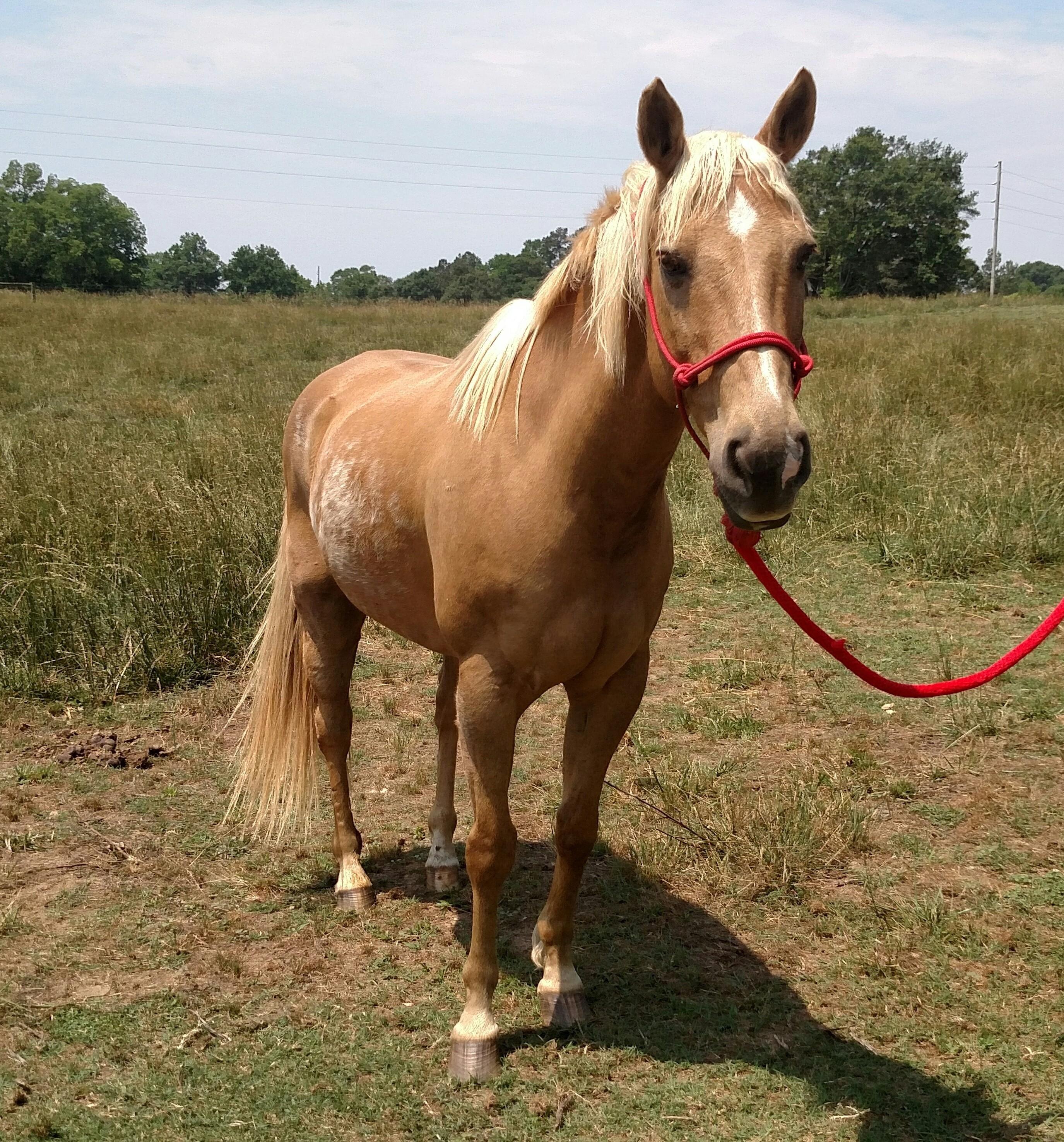 Adopt Spirit Free on Pet adoption, Pets, Palomino
