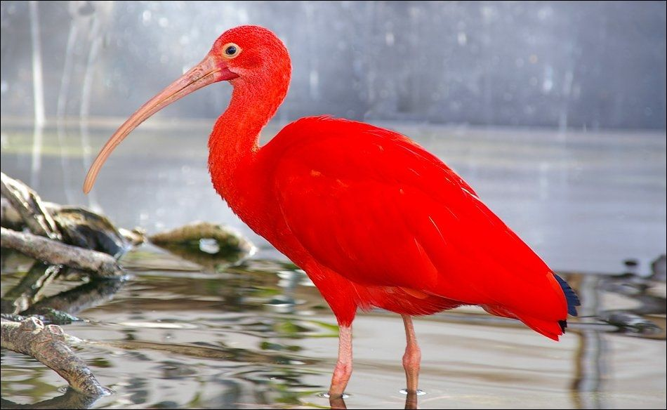 Oiseaux Exotiques Oiseaux Exotiques Oiseaux Exotique