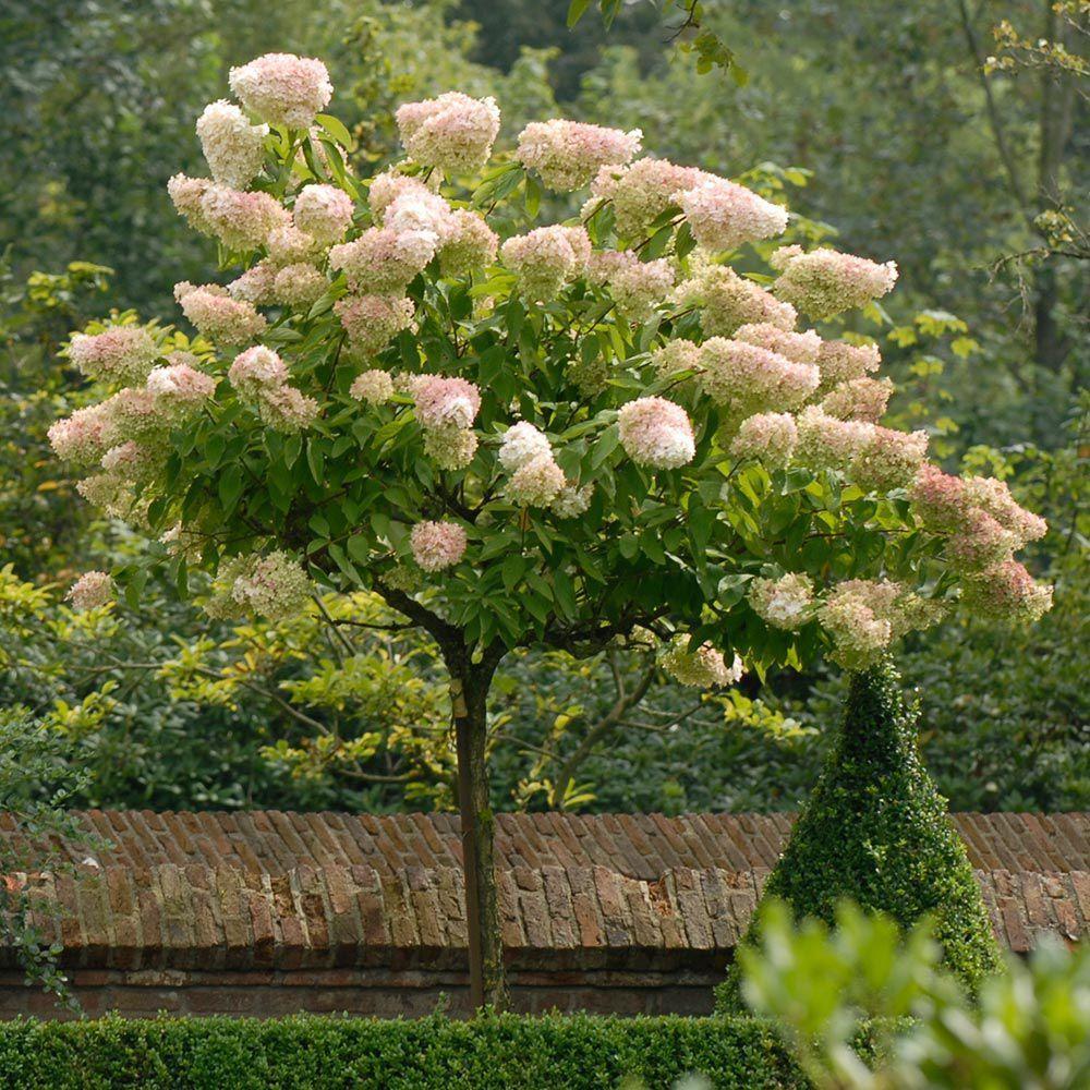 All Hydrangea Varieties White Flower Farm Garden Pinterest
