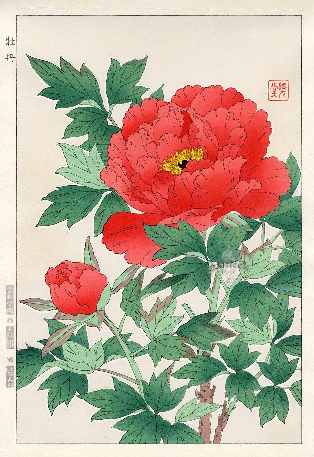 peony from shodo kawarazaki spring flower japanese woodblock prints アジアのアート 日本美術 アジアの花
