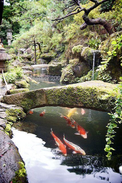 Moss covered stone bridge in Japanese garden over koi carp pond