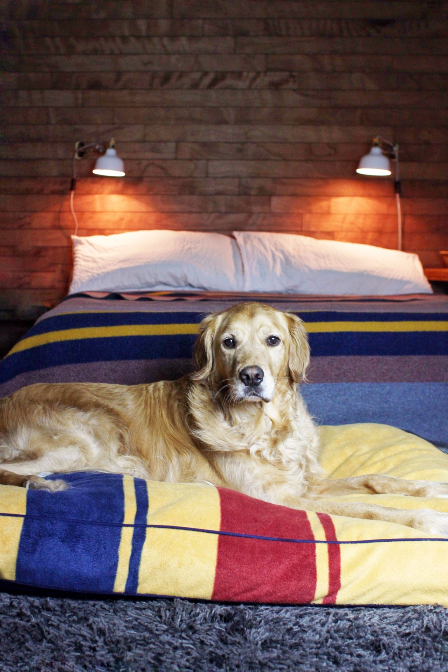 Need Gift Ideas For The Pet Parent Who Loves Pendleton Petsmart Com Has You Covered Ig Rustyrodas Pendleton Dog Pendleton Dog Bed Pet Parent