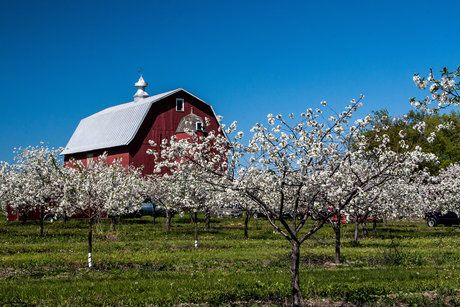 Blossoms By The Barn By Sandy Kwas On Capture Door County Door County Door County Wi Red Barn