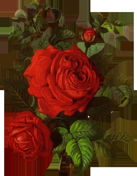 Пин от пользователя Екатерина Бриль на доске цветы   Pinterest   Blumen, Bildschirmsperre и ...