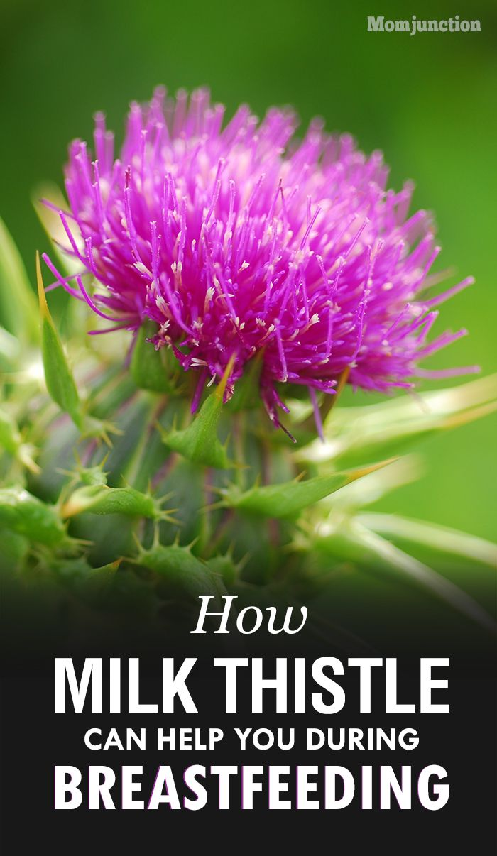 feeding during milk breast safe thistle