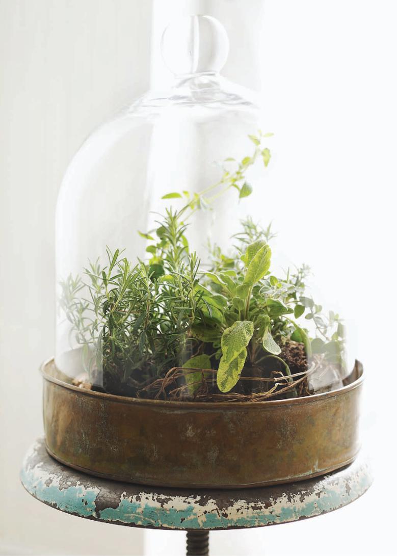 Charmant Herb Terrarium.