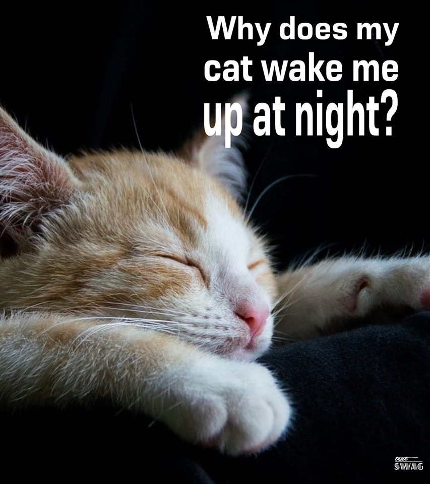 Pin On Common Cat Questions