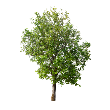 Pin On Pad樹