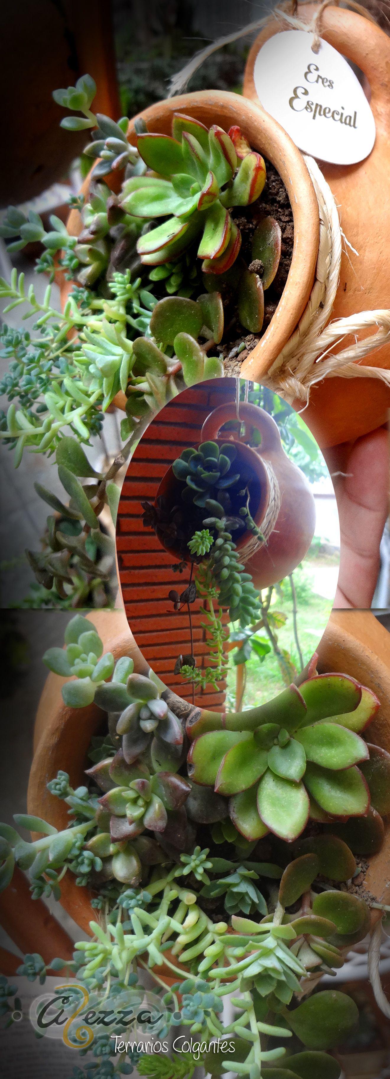 Terrario Colgante pequeño en jarrón de barro de Tavehua. Detalles artesanales. #Suculentas, #Tavehua