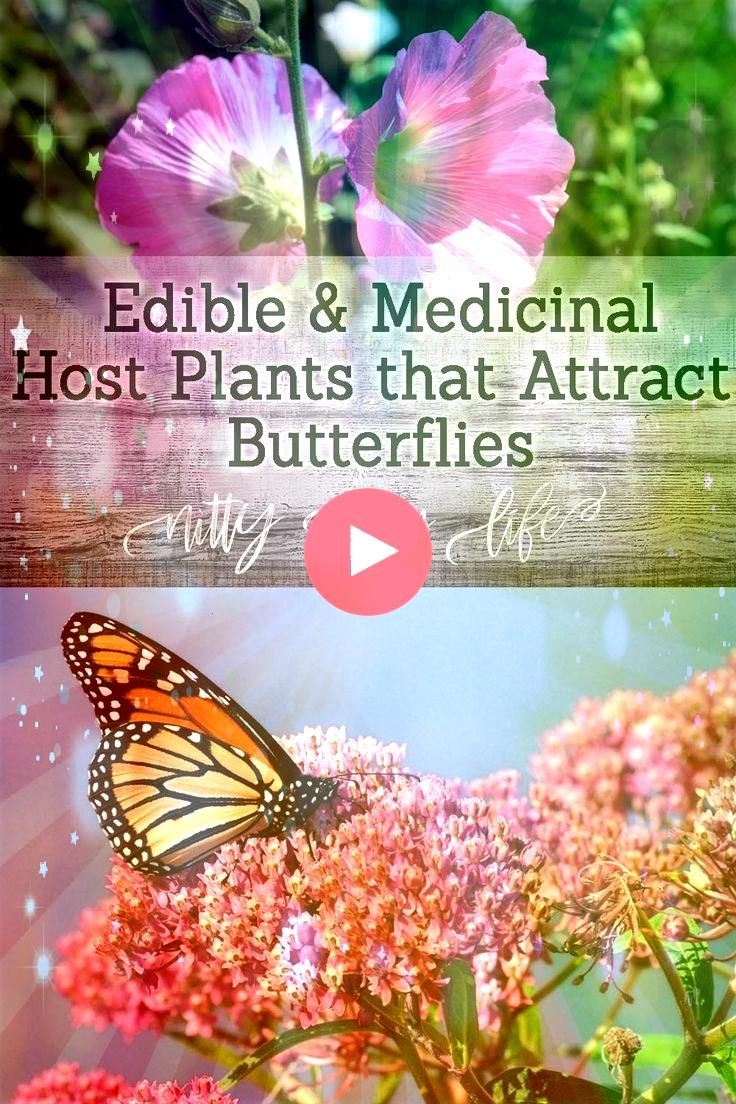 a Thriving Butterfly Garden with These Versatile Host Plants Craft a Thriving Butterfly Garden with These Versatile Host Plants Craft a Thriving Butterfly Garden with The...