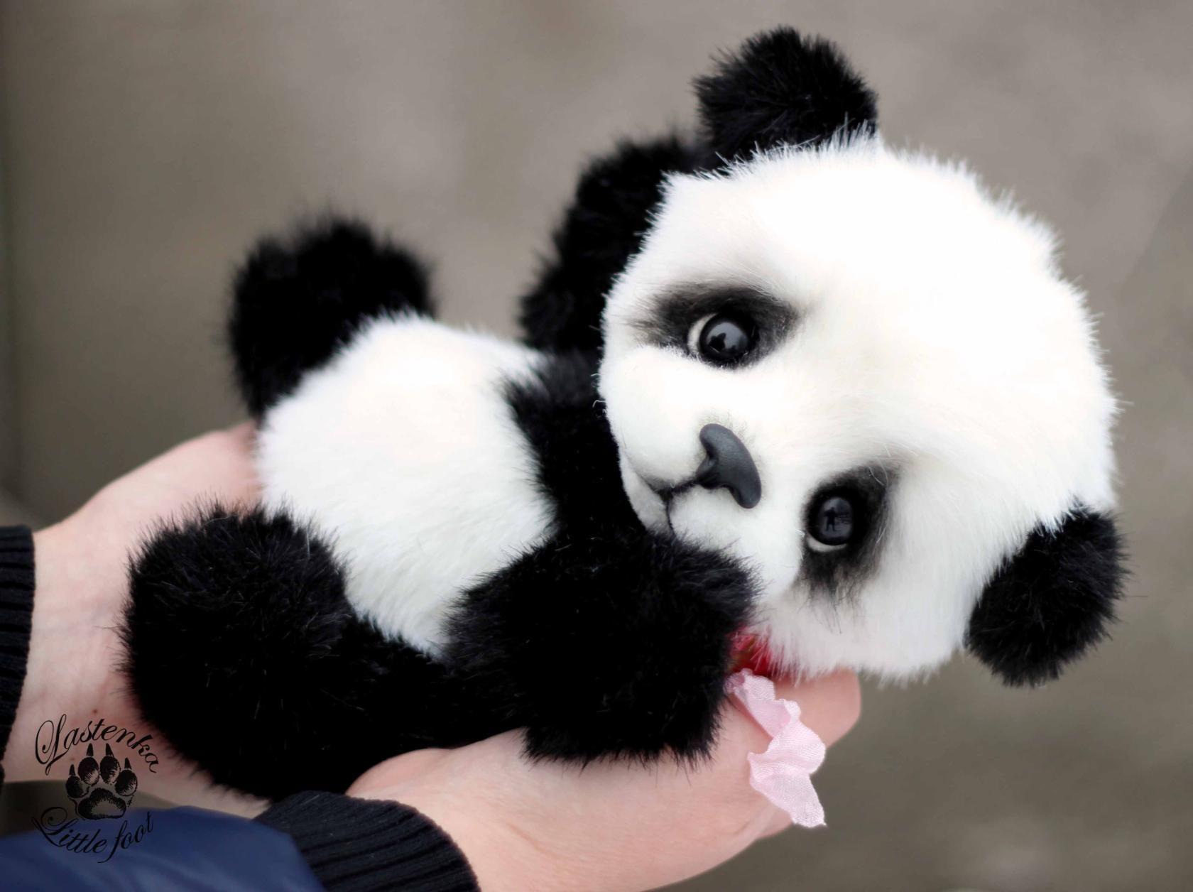 Панда милашка картинки