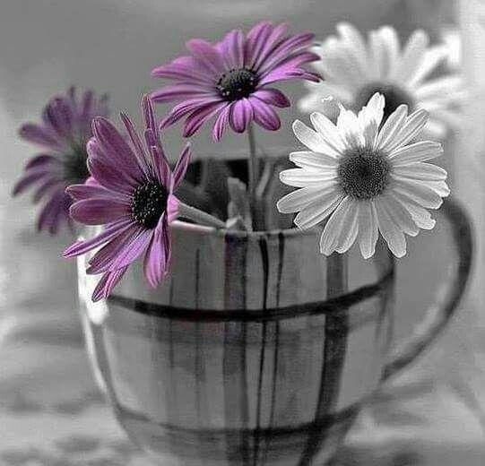 Pin von jonee5 auf Bloomin Beautiful   Pinterest   Blumen
