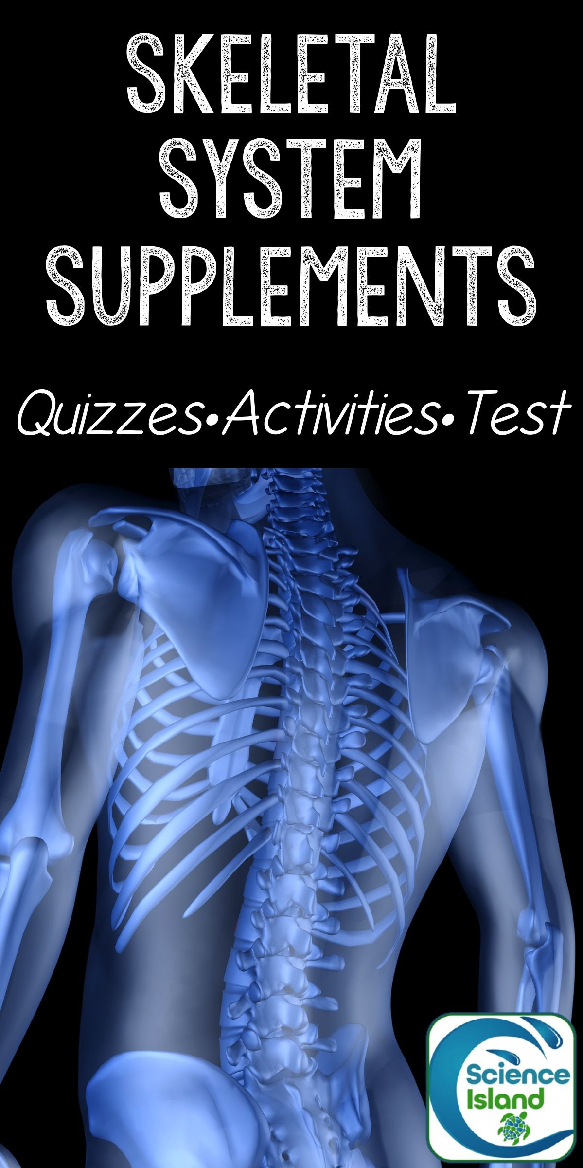 Skeletal System Supplements for Instruction and Assessment | Quizzes ...