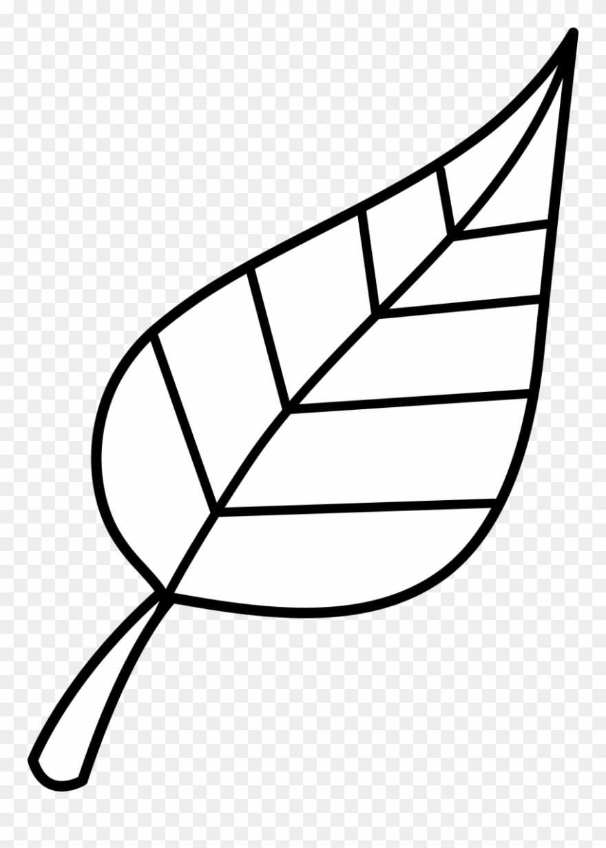 Drawing Continuous Lines Of Leaves With Simple Lines Design Vector Outline Png And Vector With Transparent Background For Free Download Simple Line Drawings Line Art Flowers Botanical Line Drawing