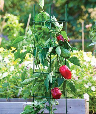 Pro Series Folding Plant Supports By Burpee 36 95 These Sturdy Stackable Supports Allow You To Custom Fit Them To Your Plants The Plants Gardening Supplies