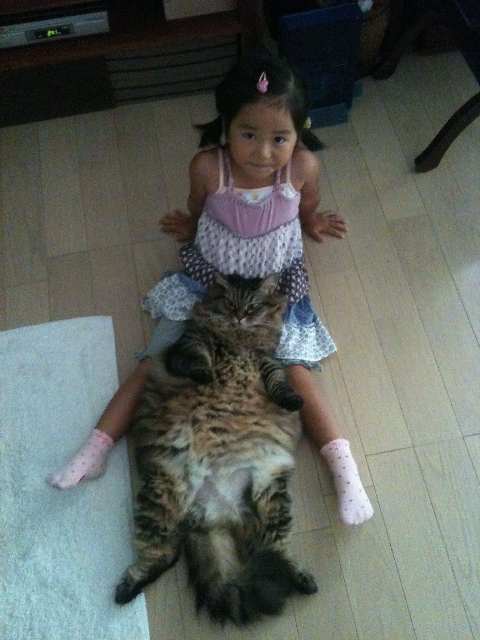♯Siberian cat