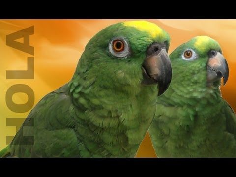 Unbelievable Singing Parrot Parrots That Sing A Song Talking Parrot Youtube Parrot Singing Funny Funny Songs