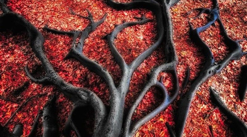 Queste raffigurate qui in basso non sono rami di un albero ma radici nere con foglie rosse