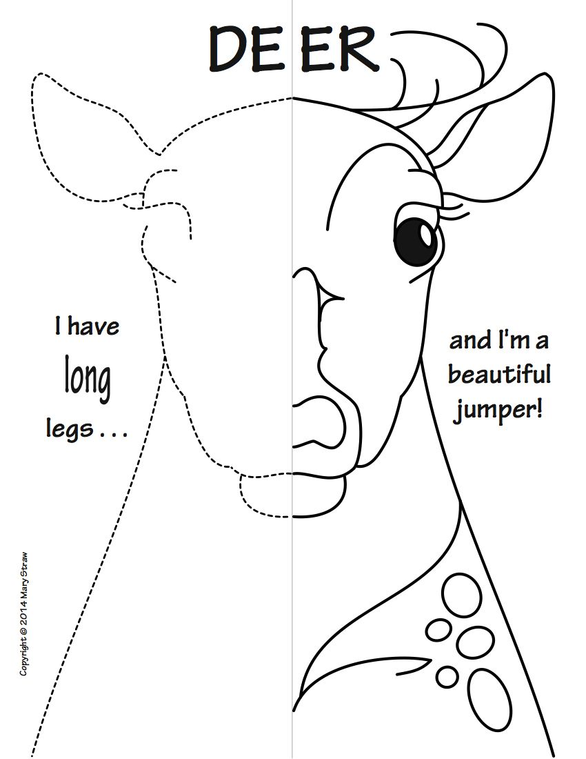 Woodland Animals Symmetry Activity Coloring Pages
