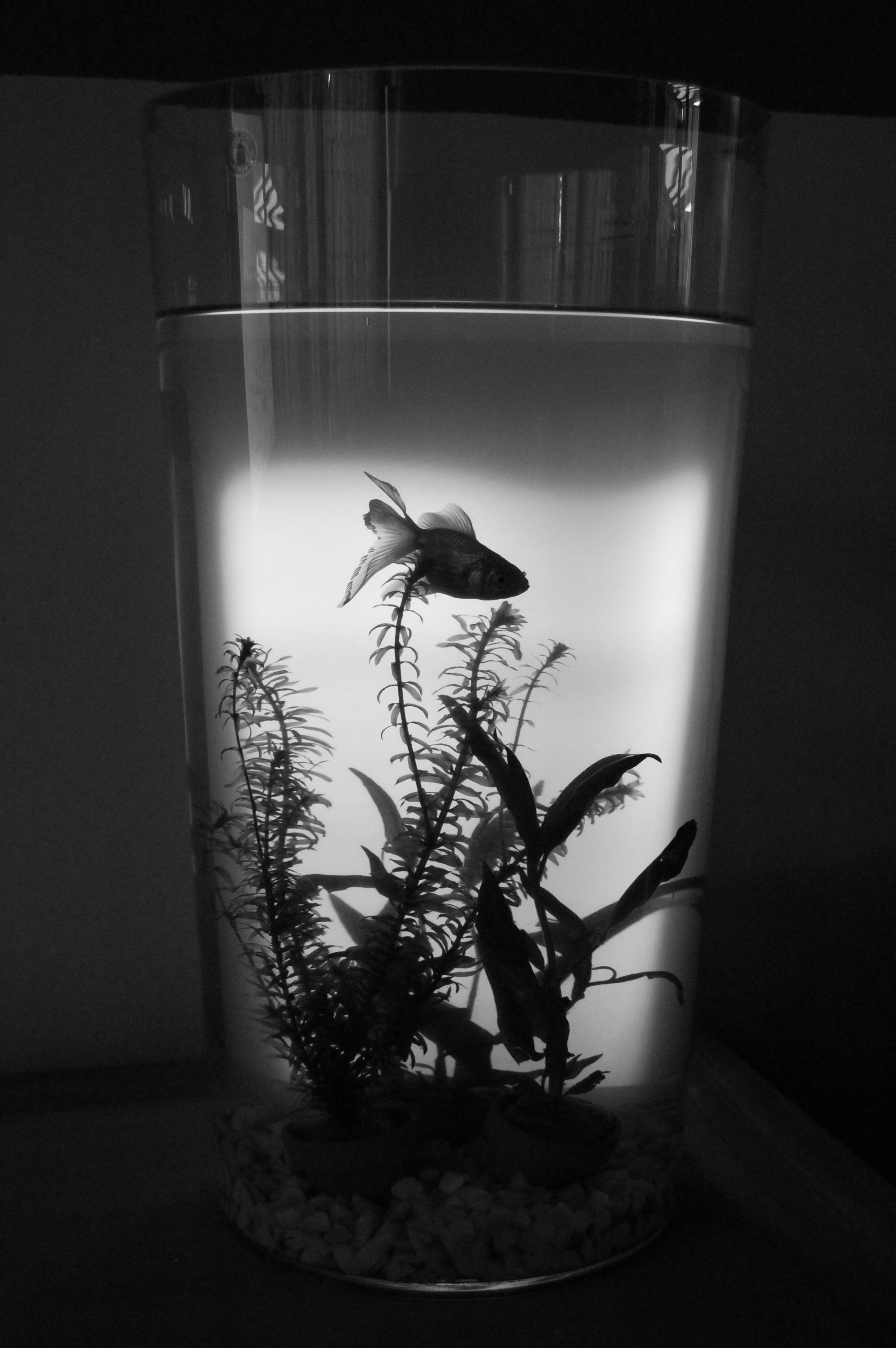mijn vis... de zon zat achter de bokaal op de muur en geeft dit resultaat... knap e