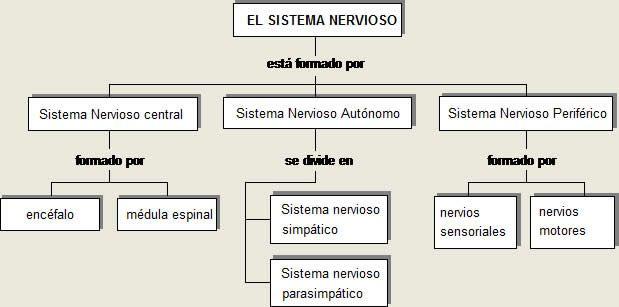Mapa Conceptual Del Sistema Nervioso Resumen Cuentos Infantiles Cuentos Fabulas Obras Manualid Sistema Nervioso Mapa Conceptual Sistema Nervioso Humano