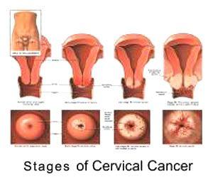 Anatomy test in pregnancy
